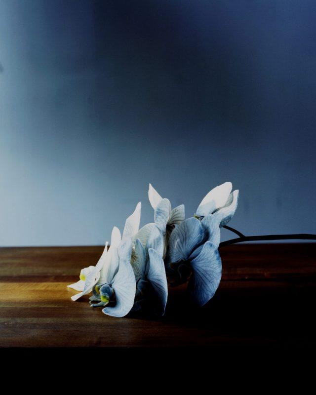 1810_Flowers_05-07-Final