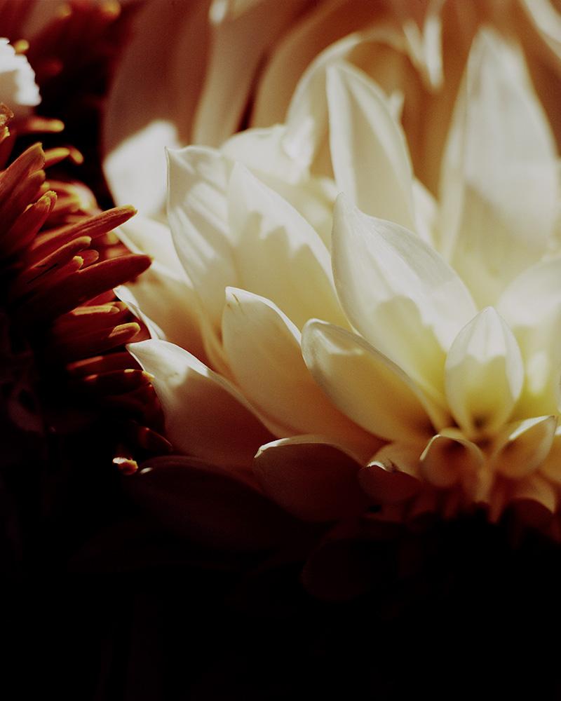 1810_Flowers_13-10